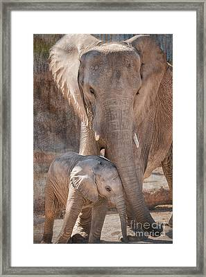 Baby African Elephant Wanting Affection Framed Print by Al Andersen