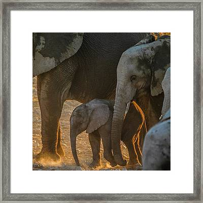 Baby And Siblings Framed Print