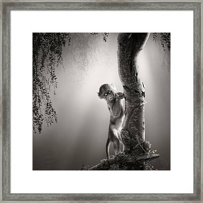 Baby Baboon Framed Print by Johan Swanepoel