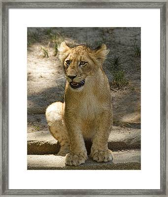 Framed Print featuring the photograph Baby Baby by Cheri McEachin