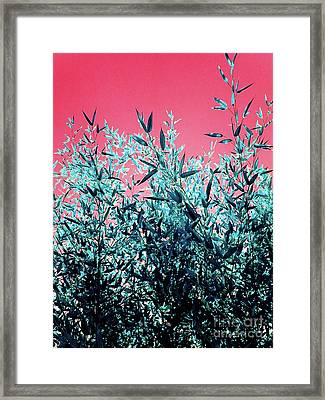 Baby Bamboo - Deep Pink And Blue Framed Print