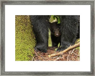 Baby Bear Greeting Card Framed Print by Everet Regal