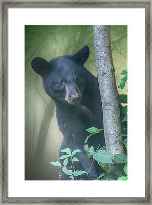 Baby Bear Takes A Peek Framed Print