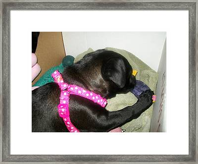 Baby Bella Framed Print by Jewel Hengen