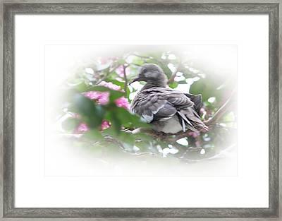 Baby Bird In Crape Myrtle Tree Framed Print by Linda Phelps