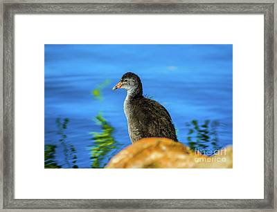 Baby Bird Framed Print