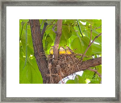 Baby Birds Waiting For Mom Framed Print