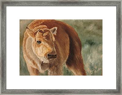 Baby Bison Framed Print by Angeles M Pomata
