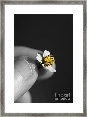 Baby Bloom Framed Print by Jorgo Photography - Wall Art Gallery