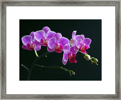 Baby Bloomers Framed Print by Juergen Roth
