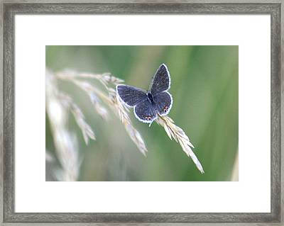 Framed Print featuring the photograph Baby Blue by David Dunham