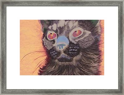 Baby Blue Eyes Framed Print by Jessica Kale