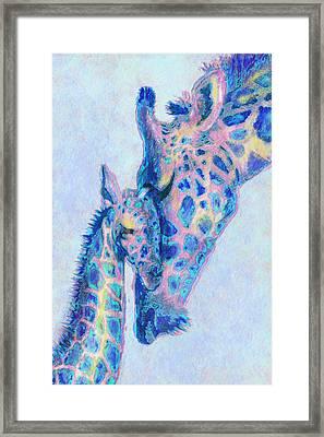 Baby Blue  Giraffes Framed Print