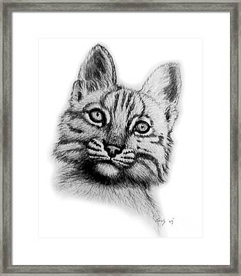 Baby Bobcat Framed Print by Nick Gustafson