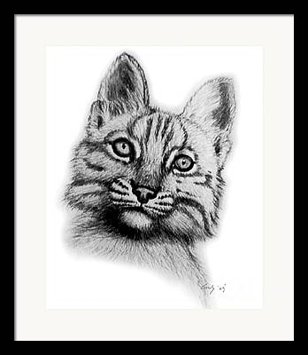 Bobcat Drawing Drawings Framed Prints