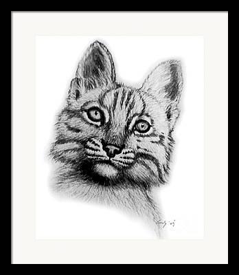 Bobcat Drawing Framed Prints