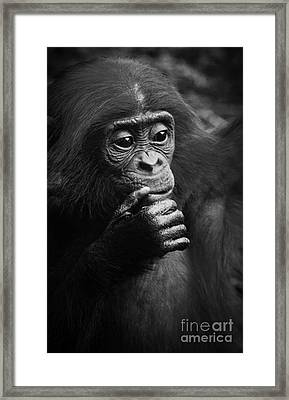 Framed Print featuring the photograph Baby Bonobo by Helga Koehrer-Wagner