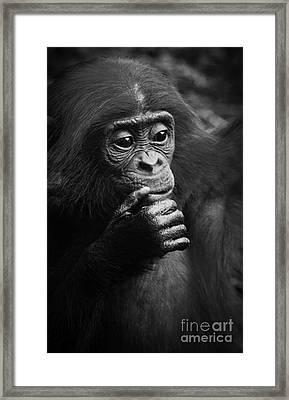 Baby Bonobo Framed Print