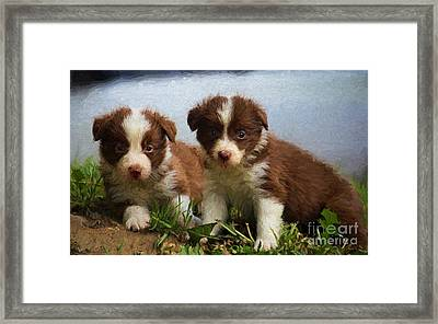 Baby Border Collies Framed Print