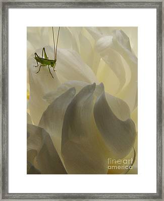 Baby Bud Framed Print by Mark Holbrook
