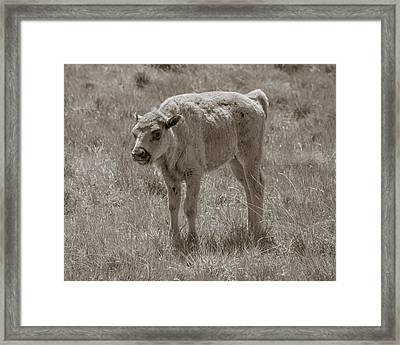 Framed Print featuring the photograph Baby Buffalo by Rebecca Margraf