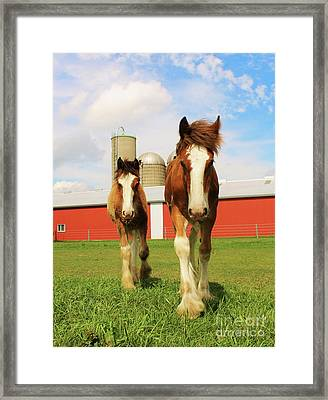 Baby Clydesdale's  Framed Print by Anthony Djordjevic