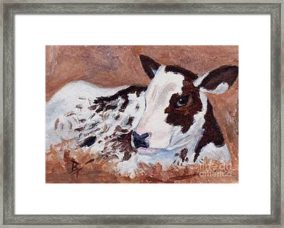 Baby Cow Aceo Framed Print by Brenda Thour