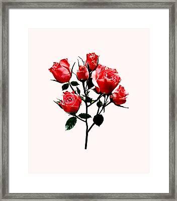 Baby Dark Pink Roses Framed Print by Susan Savad