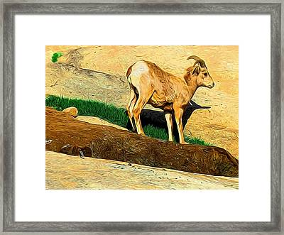 Baby Desert Bighorn In Abstract Framed Print