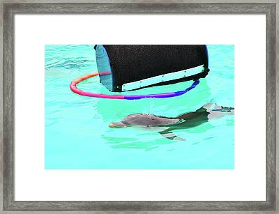 Baby Dolphin Framed Print by Peter  McIntosh