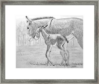 Baby Donkey Framed Print by Dave Alwin