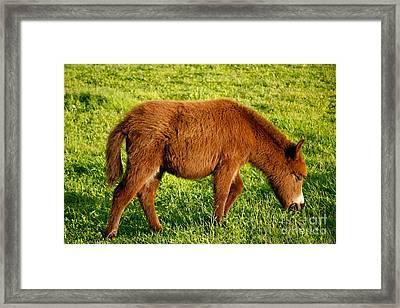 Baby Donkey Framed Print by Gaspar Avila