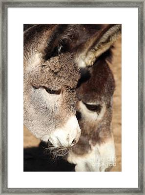 Baby Donkey Framed Print by Pauline Ross