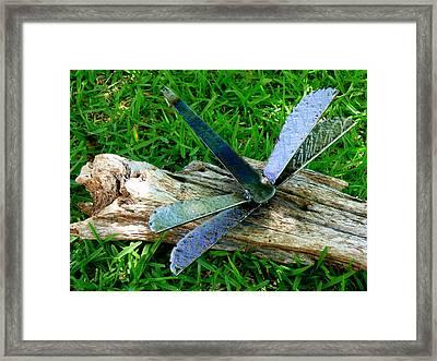 Baby Dragon Framed Print by Kirk Long