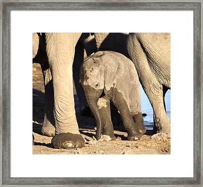 Baby Elephant - Wet And Tired Framed Print by Nancy D Hall