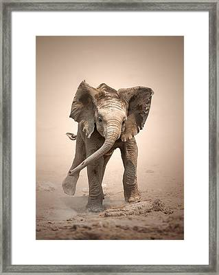 Baby Elephant Mock Charging Framed Print by Johan Swanepoel
