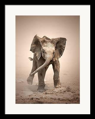 Mocking Photographs Framed Prints