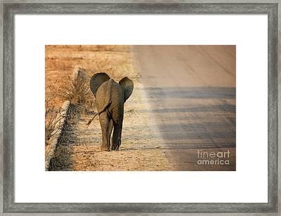 Baby Elephant Rear View Framed Print by Jane Rix