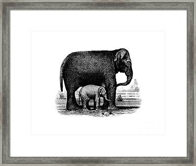 Baby Elephant T-shirt Framed Print by Edward Fielding