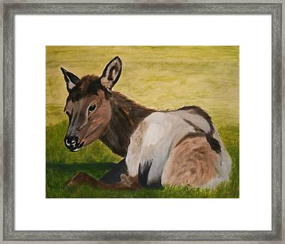 Baby Elk Framed Print by Robert Tower