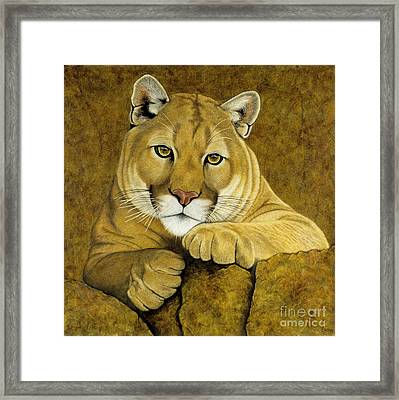 Baby Face Framed Print by Lawrence Supino
