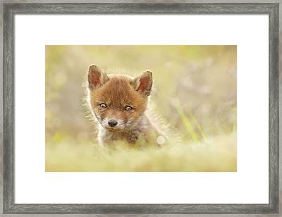 Baby Fox Framed Print