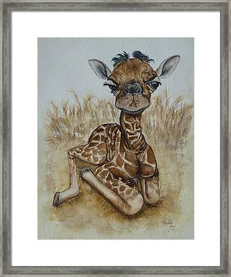 New Born Baby Giraffe Framed Print