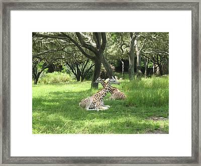 Baby Giraffes  2  Natural Framed Print by Sharon Wright Duncan