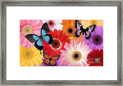 Summer's Desgn Framed Print