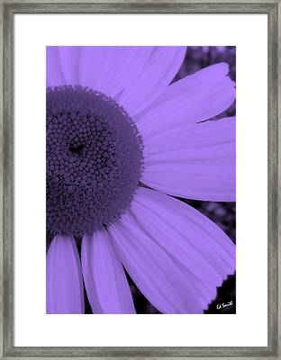 Baby Girlz Framed Print by Ed Smith