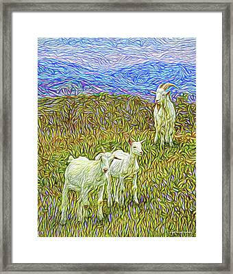 Baby Goats Of The New Dawn Framed Print