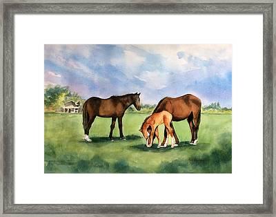 Baby Horse Framed Print