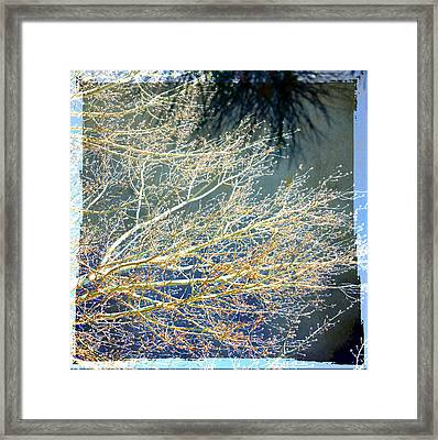 Baby It's Cold Out There Framed Print by Susanne Van Hulst