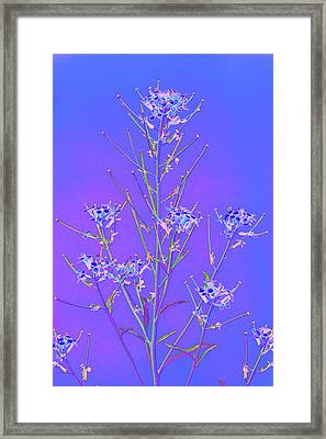 Baby It's Cold Outside Framed Print by Richard Henne